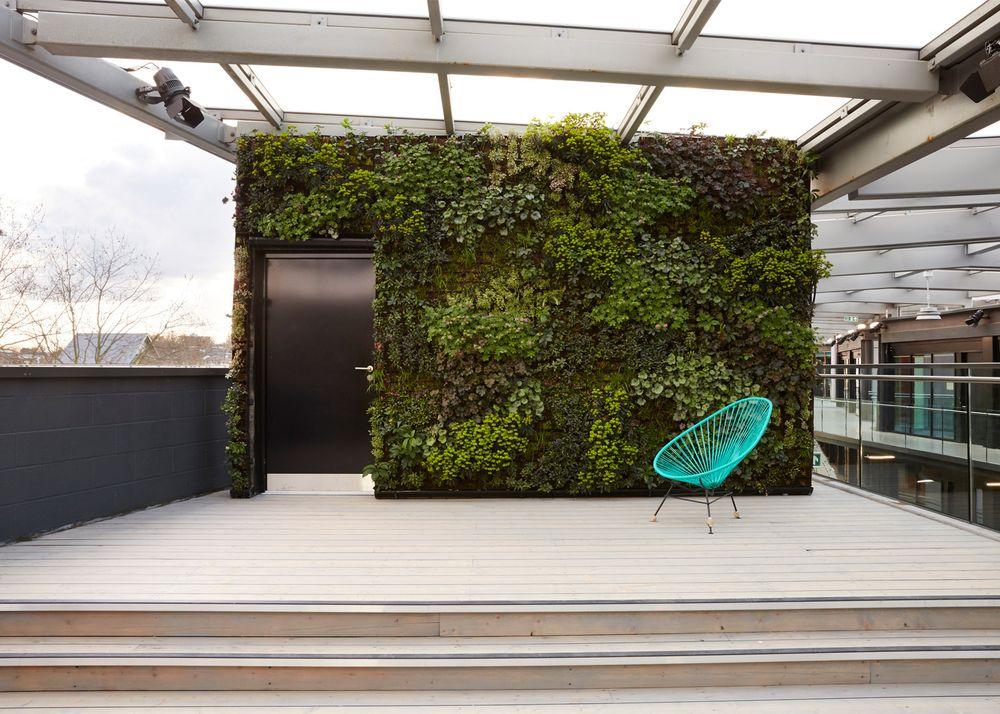 Коворкинг офис - вертикальный сад