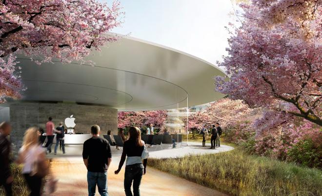 Сакуры возле будущей штаб-квартиры компании Apple