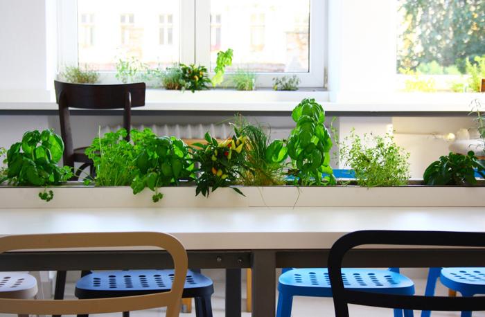 Растения на обеденном столе